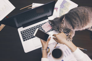 Cat and owner at desk